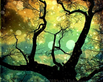 Nature Photography Tree Branches Night Sky Surreal Trees Black Turquoise Blue Yellow 5x5 inch Fine Art Print Drifting in the Evernight