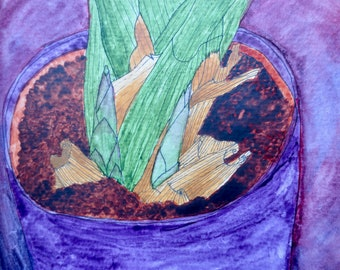 Bromeliad Shoots