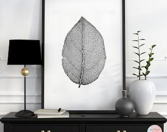 Minimalistic, fine art photography, Black / White Photography, leaf, macro