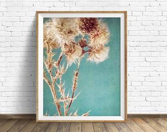 "nature photography, instant download printable art, large art, large wall art, botanical prints, nature wall art, nature prints - ""Thistles"""