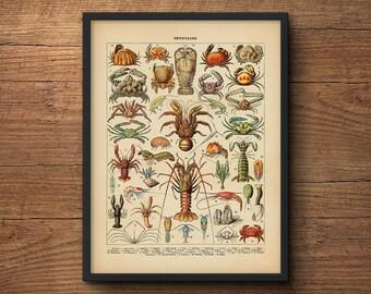 Beach Wall Art, Crustaceans Print, Lobster Art, Coastal Art, Scientific Illustration, Coastal Prints, Large Wall Art, Large Poster, Lobster