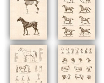 Horse Print  Antique Print Equestrian Prints, set 4 Prints 14x11, country cottage decor, rustic cottage decor
