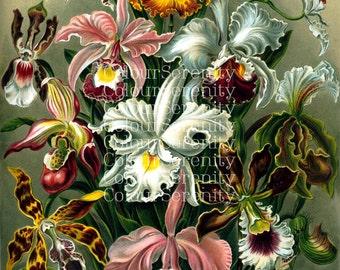 Vintage Flower Scene - Instant Download printable jpg
