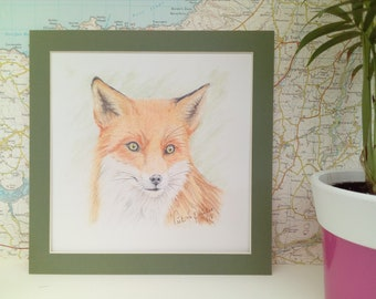 Red Fox drawing in colour pencils