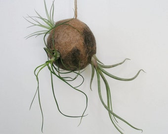 Air Plant Holder, Llama Fibre Deco, Air Plant Planter, Tillandsia Display, Indoor Planter, Air Plant Pod, Air Plant Hanger, Tillandsia Pod