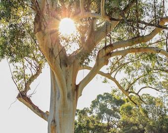Art, photograph, nature photograph, tree photograph, sun photograph.