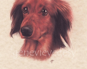 Original drawing of a Teckle - Dog drawing made with colored pencils
