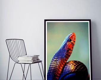 50%OFF,  Snake Art Print  Green Snake Wall Art Snake Home Decor Nature Art Colourful Digital Print Art Snake printable