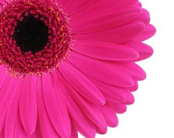 Hot Pink Gerbera Daisy -Digital Download