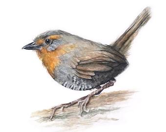 Bird Illustration Watercolor Painting Bird Watercolor, Chucao Tapaculo, Art Print, Forest Bird, Animal Illustration, Giclee