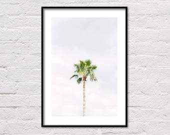 Florida Palm Tree Print, Beach Decor, Printable Art, Palm Printable, Botanical Prints, Palm Tree Photo, Florida Photography, Digital