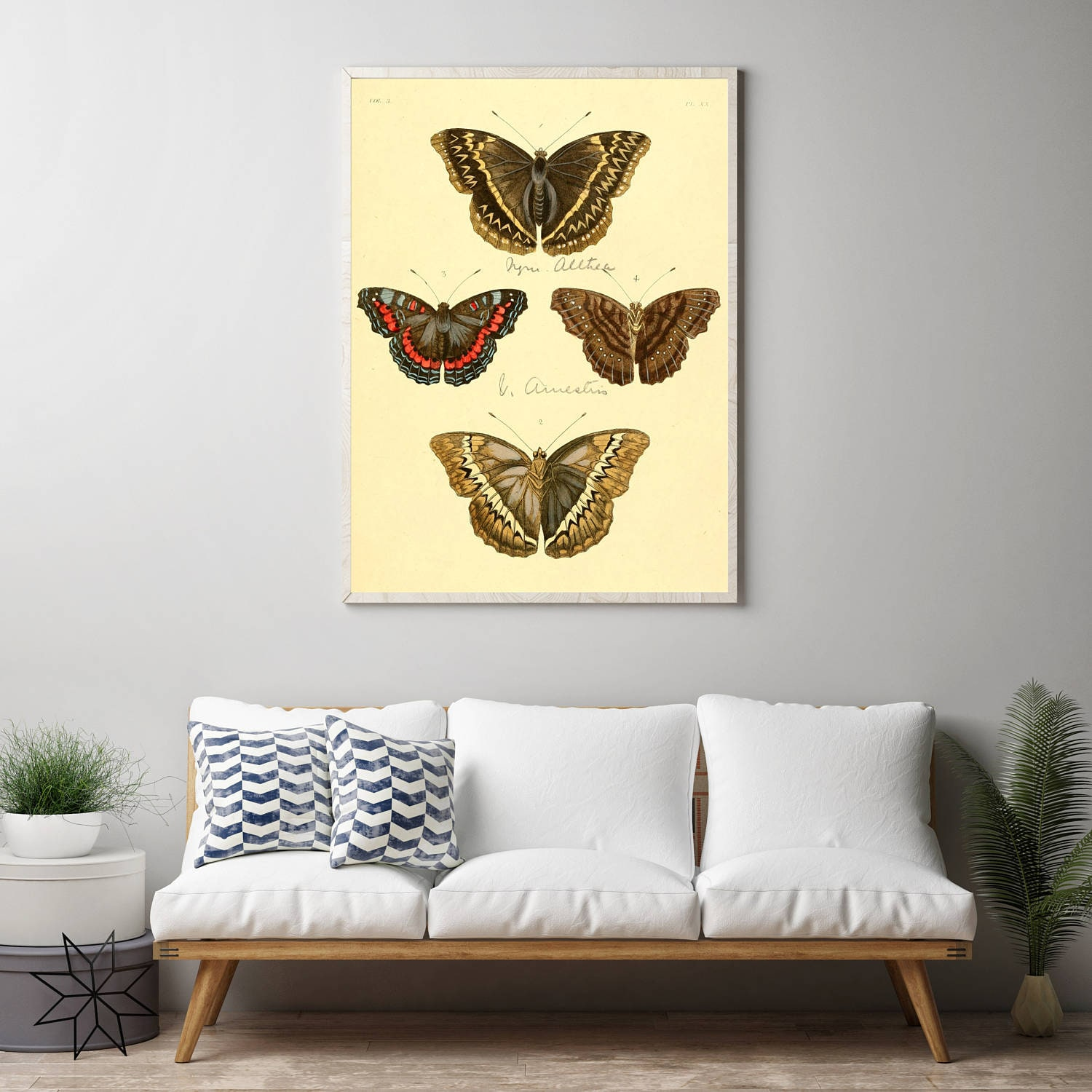 Butterfly Wall Print Biology Wall Art Insect Biology Months