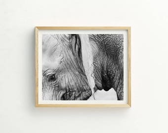 Baby Elephant Print | Elephant Print | Elephant Wall Art | Elephant Photography | Instant Download | Elephant Picture | Animal Photography