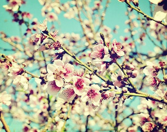 Nectarine Blossoms - Vintage-Style Fine Art Photo - 5x7 Pink and White Flower Photograph - Made in Israel