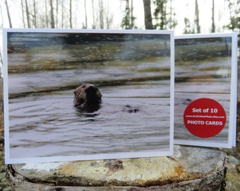Sea Otter - Glossy Greeting Card - Set of 10