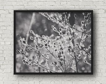 Summer weeds in sunlight, black and white fine art photography print, nature photography, art print (summer field 06)