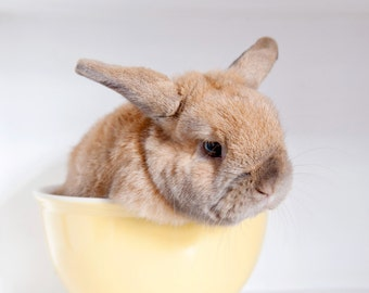 Bunny in Cup Photo