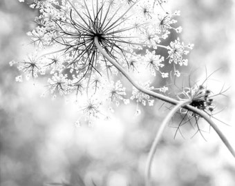 Queen Anne's Lace Wall Art in Black and White, Minimilistic Home and Office Decor, Modern Rustic Flower Decor,