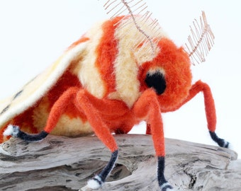 RESERVED for HEATHER! Needle Felted Moth, Large Moth Sculpture, Saturniid Moth