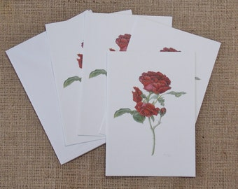 """Cadenza rose, Annie's Red, package of 4 blank note cards with envelopes, all one design, 5"""" x 7"""""""