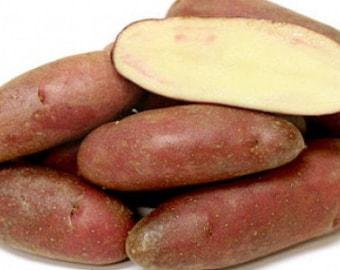 French Fingerling Potato 6 Tubers - Heirloom
