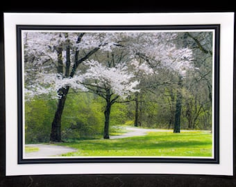 Spring Blossoms & Winding Paths By ThomasMinutoloPhotos