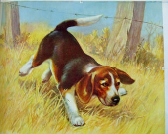 Vintage Beagle Advertising Poster (Photo Proof)