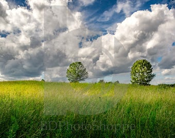 Two trees in a Field | Landscape Photo Art | Nature Lover Gift | Fine Art Photography | Personalization | BDPhotoShoppe | Home Office Decor