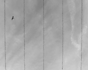 Bird Print, Minimalist Print, Minimalist Photo, Bedroom Wall Art, Sky Print, Cloud Photo, Scenic Photo, Abstract Bird, Surreal Bird Art
