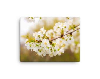 Cherry Blossom Canvas / Cherry Blossom Art / Cherry Blossom photograph