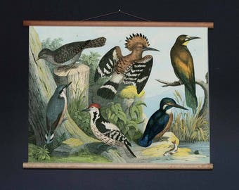Avian Collection Pull Down Chart