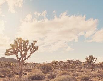 desert, Joshua Tree photograph, boho decor, Palm Springs art, Coachella art, Joshua Tree print,  desert baby wall art, California poster