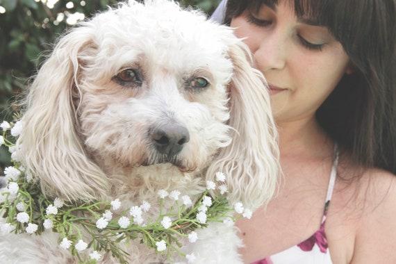 Baby's Breath Dog Flower Collar. Dog Flower Collar.  Dog flower wreath. Dog wedding collar. Dog Collar. Dog costume.