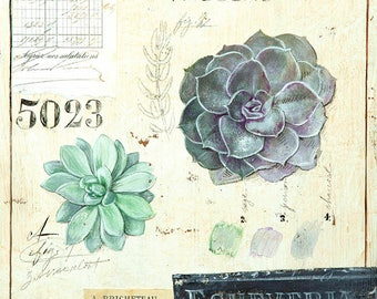 Echeveria Print, Succulent Print, Botanical Print, Botanical Illustration, Succulent Illustration