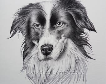 Limited Edition Collie Dog - Fine Art Giclee Print on Bamboo