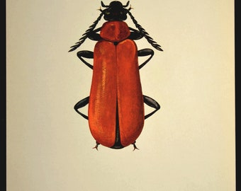Nature Wall Decor Insect Print Beetle Decor Art Bug Vintage