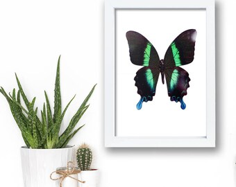 Alchemist Butterfly Green Framed Print. Beautiful botanical collection