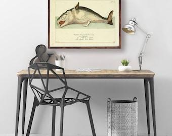 Art Vintage Cachalot, baleine Print, Illustration de baleine, Cachalot baleine affiche, océan Art, Art mural, impression zoologique, Cachalot Art déco, Art