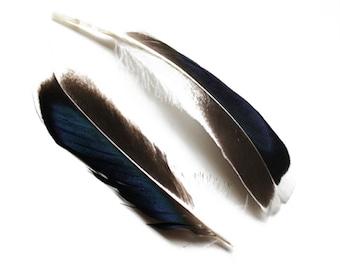 Black & Blue Mallard Duck Feathers 4-6″ | 10 pcs.