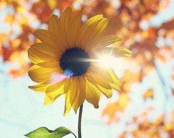 Nature Photography - Whimsical Happy Sunflower Sun Flare Photo Yellow Summer Sunshine Print Girls Room Nursery Decor Nature Garden Print