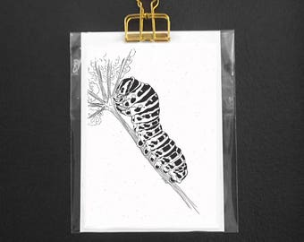 Insect postcard - Caterpillar