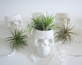 Skull plant planter, Cubicle decor, air planter, Desk decor, Ceramic Planter, Skull, succulent planter, Gothic home decor, succulent pots