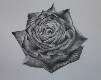 Single Rose - Original Pencil Drawing - Pencil - Graphite - Flowers - Love - Romance - Fine Art - Gifts for Her