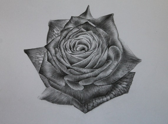 seule rose crayon dessin crayon graphite fleurs. Black Bedroom Furniture Sets. Home Design Ideas