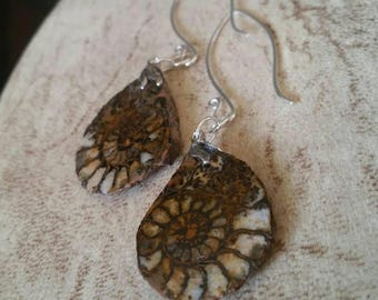 Ammonite Earrings threaders nautilus