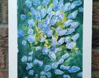 Ceanothus bloom