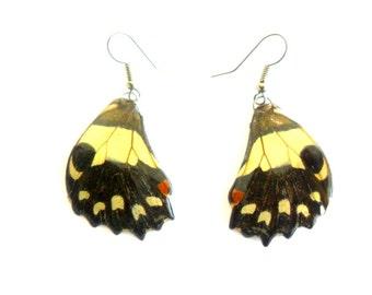 Real Butterfly Wings Earrings Handmade Jewelry Gift  Natural Jewelry Earring