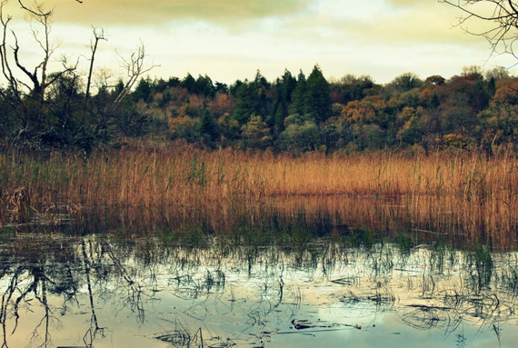 "18"" x 12"" Irish Landscape Photograph of Lough Key Forest Park"