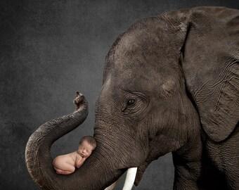 Elephant Black Background, Digital Background, Digital Backdrop, Photo Backdrop, Backdrop, Child, Photoshop, Newborn, Photo Collage
