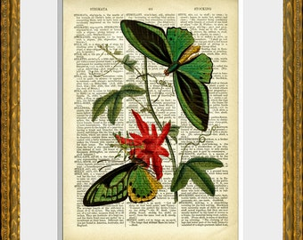 TWO GREEN BUTTERFLIES recycled book page art print - an upcycled 1800's dictionary page with an antique butterfly illustration - wall art